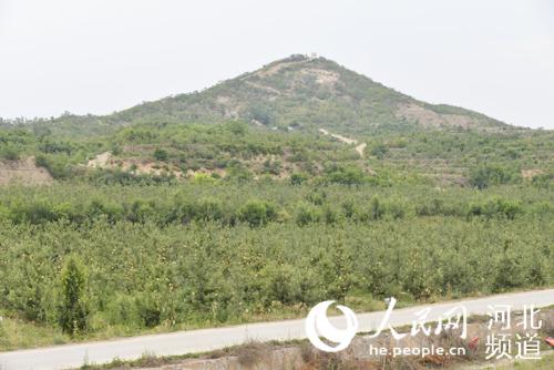 图为河北省石家庄市行唐县上闫庄乡神树村村北山地上的大片苹果树林
