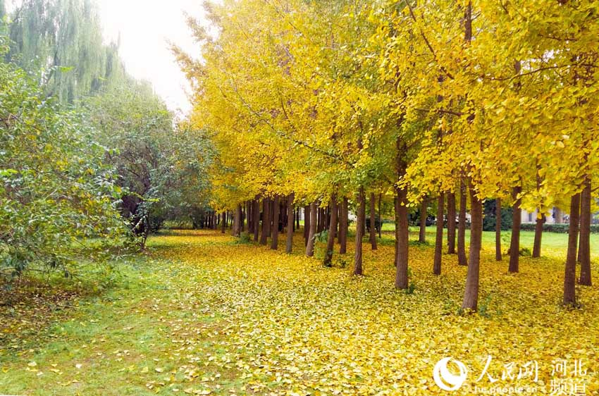 立冬纪念 河北大学生用镜头留住最后的秋景(图)