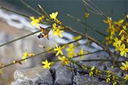 河北石家庄:风暖日长 春意融融3月21日,进入春分时节,春天的一切景致开始变得明朗起来。随着气温的逐渐升高,河北省会石家庄呈现出一派陌上草熏、花间风暖、百花竞放、垂柳吐绿之美景。
