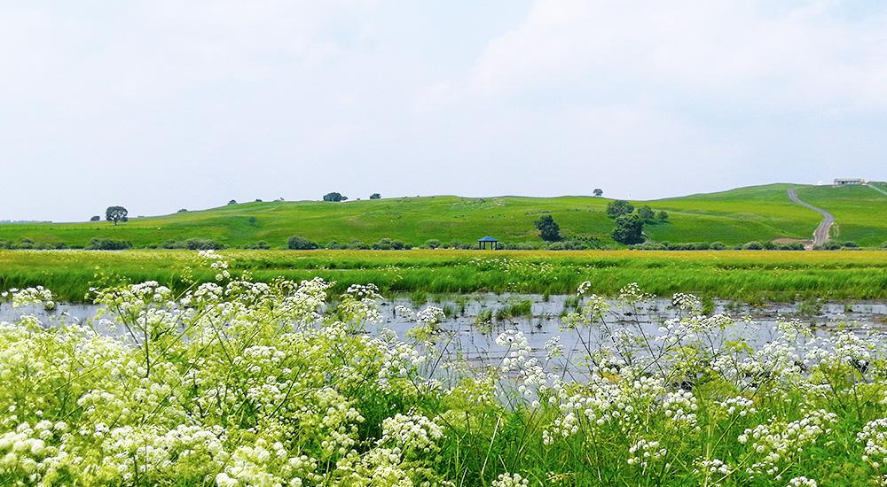 """畅游""""国家一号风景大道"""" 尽享森林草原生态之美"""
