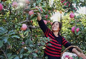 河北卢龙:果树满坡富农家