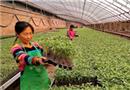 科学育苗助农增收