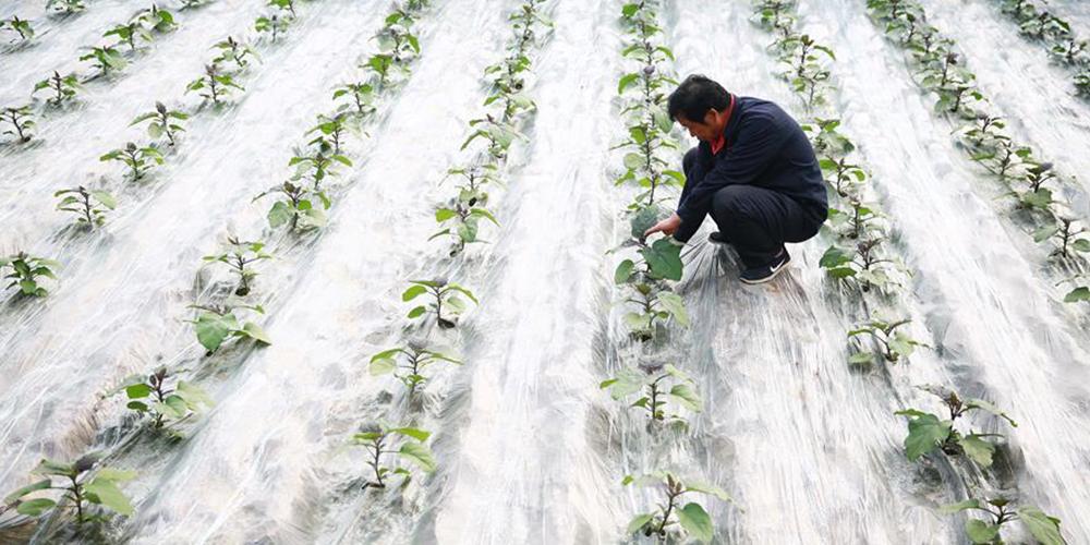 河北内丘:产业扶贫促增收