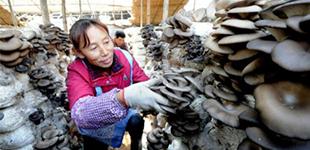 河北省六大举措激发贫困群众内生动力