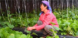 河北文安:现代农业助推乡村振兴