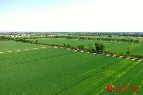 河北:49处大中型灌区已春灌农田486万多亩