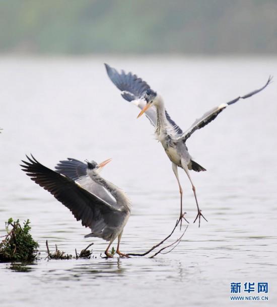 鹭舞观山湖